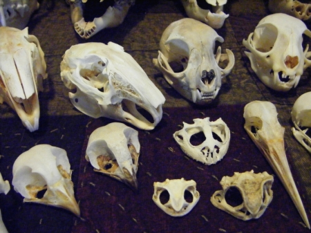 The tiny skulls - birds, cats, hares, and toads...