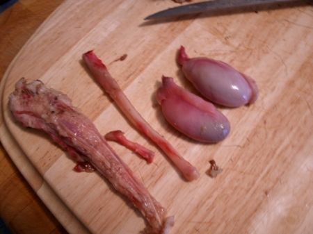 Bear tail, baculum, and testicles