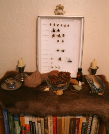 The naturalist's altar