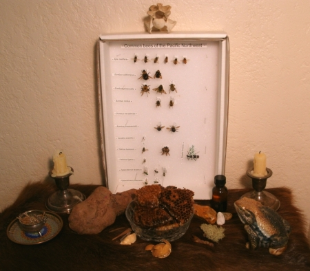An altar of nature's specimens