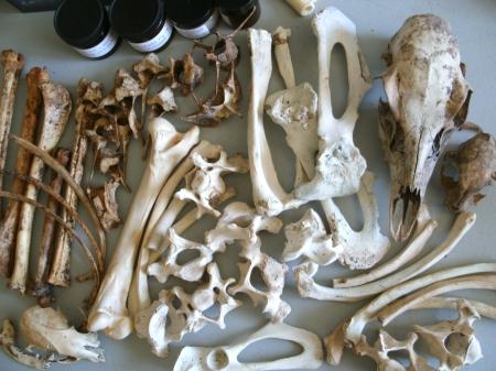 A gift of bones and skulls