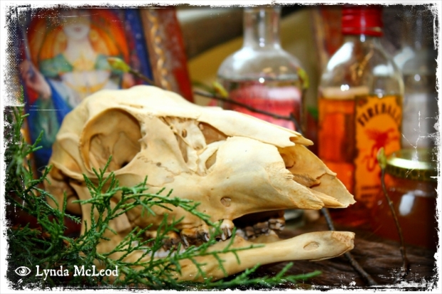 Deer skull and juniper