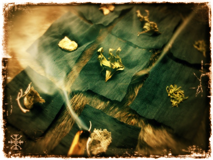 Cleansing the herb and snake specimens with palo santo